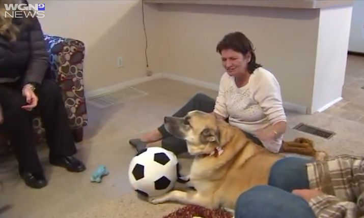 homeless woman given home for her and dogs-WGNvid