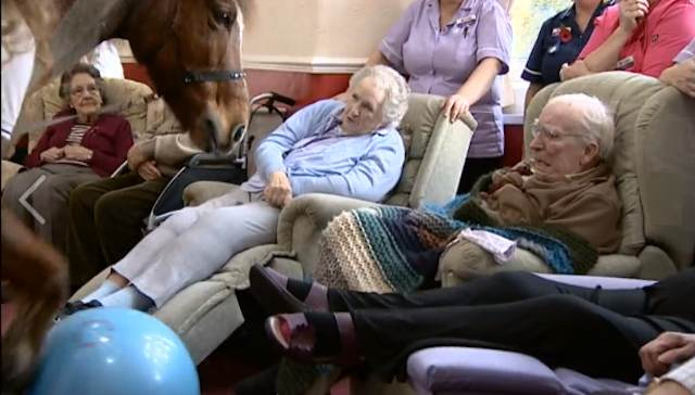 therapy horse entertains seniors-BBCvideo