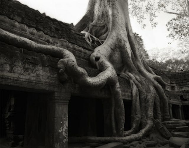 Ankor-ancient-tree-BethMoonPhotography