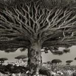 ancient-trees-beth-moon