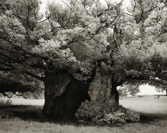 ancient-trees-beth-moon-photo