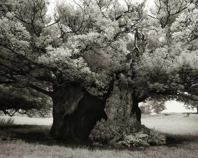 ancient-trees-beth-moon-photo