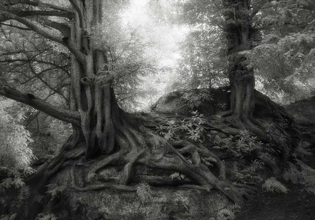 ancient-trees-beth-moon-photography