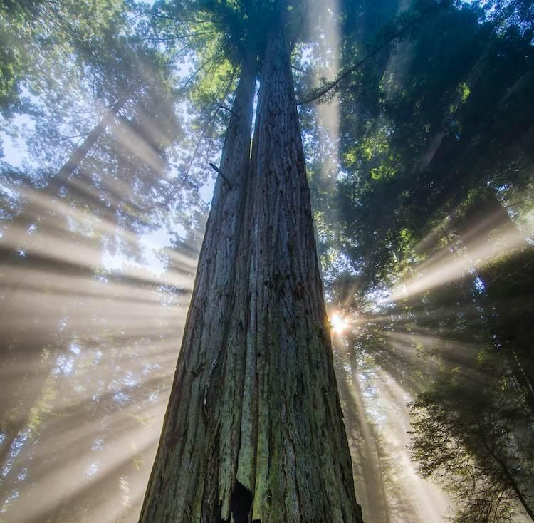redwoods-starburst- CraigGoodwin-CC
