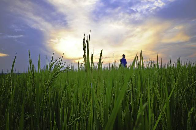 GatesFoundation-farmer-in-field-sunrise