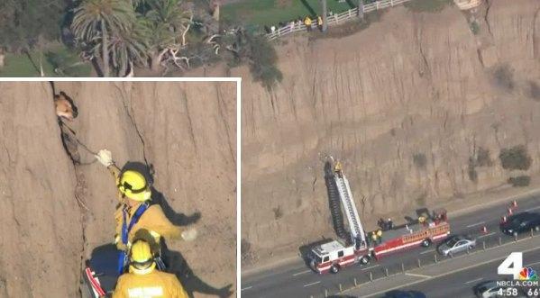 cliff-rescue-dog-LA-NBC4video