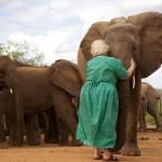 Dr_Dame_Daphne_Sheldrick-elephant-hug-CopyrightTheDavidSheldrickWildlifeTrust