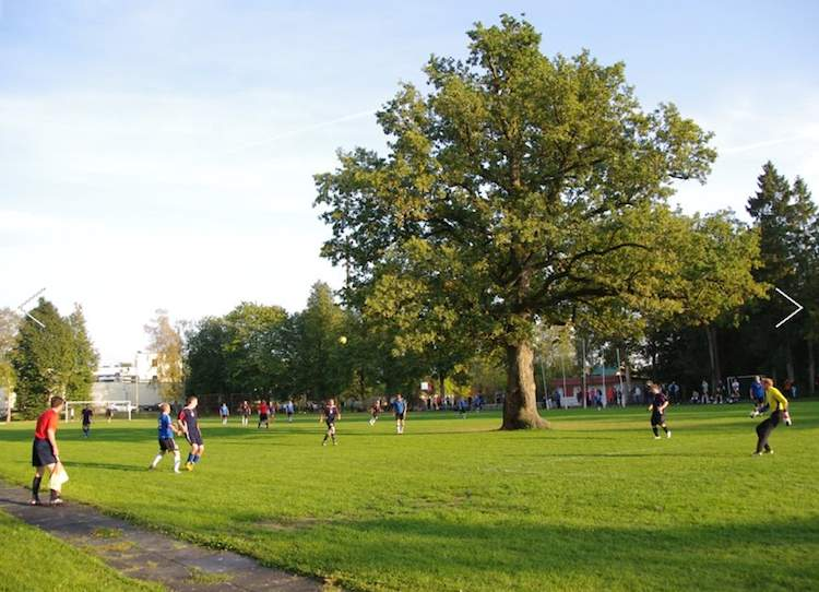 Estonia-oak-EuropeanTreeOftheYear-Elina Kalm-released