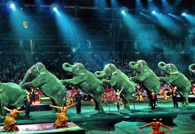 circus-elephants-CC- hbp_pix