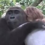 gorilla hug-326px