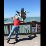 pelican-grabbed-for-rescue-YouTube