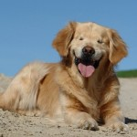 smiley-blind-dog-JoanneGeorge-FB-750px
