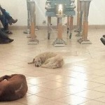 stray-dogs-attend-funeral-Patricia Urritia-FB
