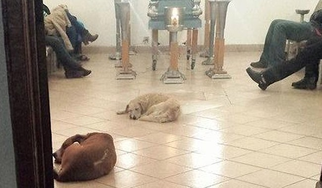 stray-dogs-attend-funeral-Patricia Urritia-FB