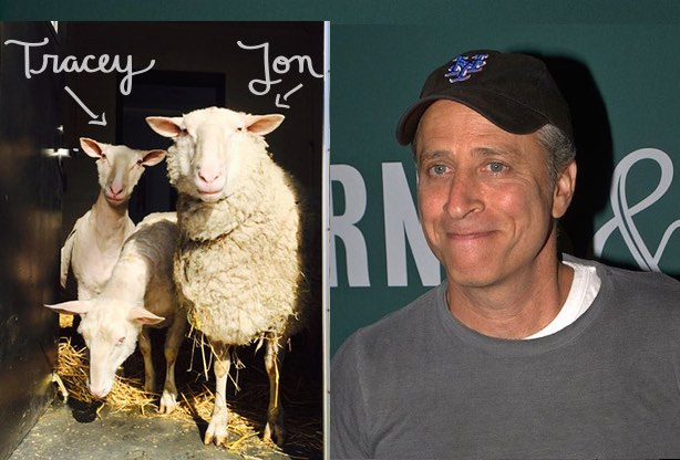Jon_Stewart_CC-DavidShankbone-and-sheep-FarmSanctuary-blog.jpg