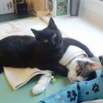 Polish cat comforts cat-Imgur