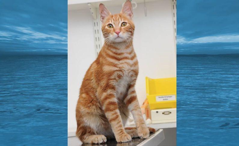 Sinbad-cat-travels-ocean-as-stowaway-JustGivingDotCom