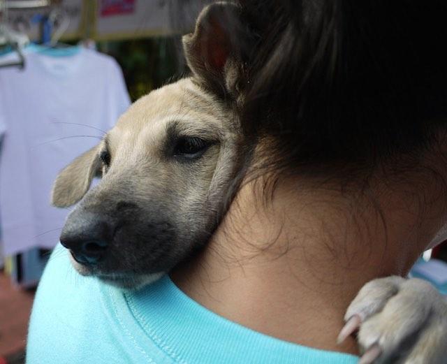 dog-hug-CC-nSeika
