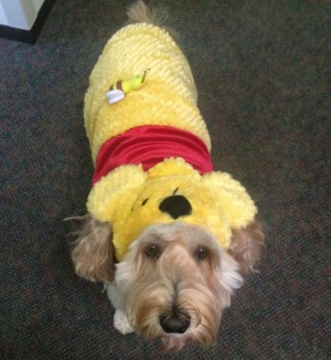 dog-in-Costume-submitted