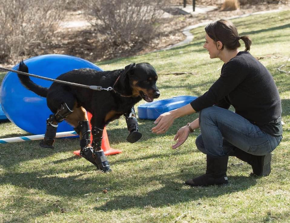 dog-prosthetic-Better-paws-for-brutus-FB