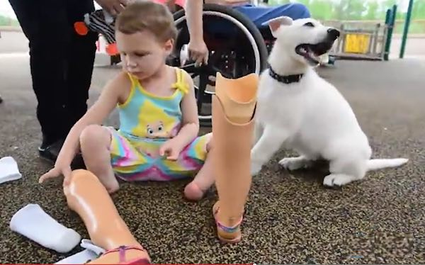dog-with-girl-prosthetic-YouTube-GreenvilleNews