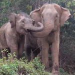 elephant-mom-baby-reunion-ENPark