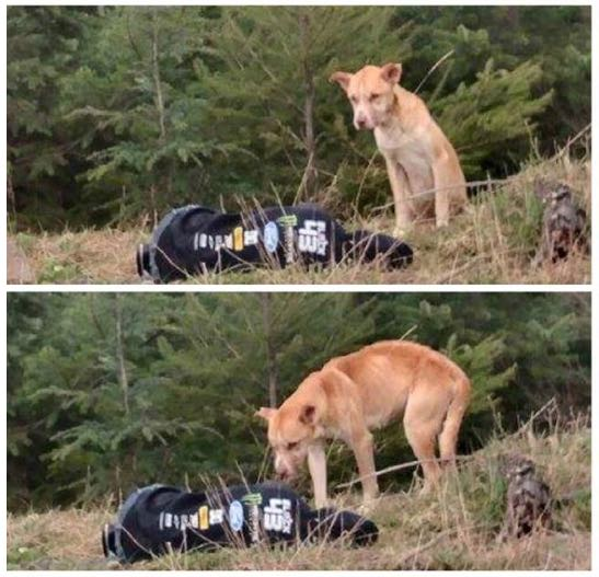 feigning-injury-to-rescue-dog-FB-Amanda Guarascio