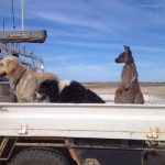 kangaroo-with-dogs-on-farm-Familyphoto-FelicityStewart