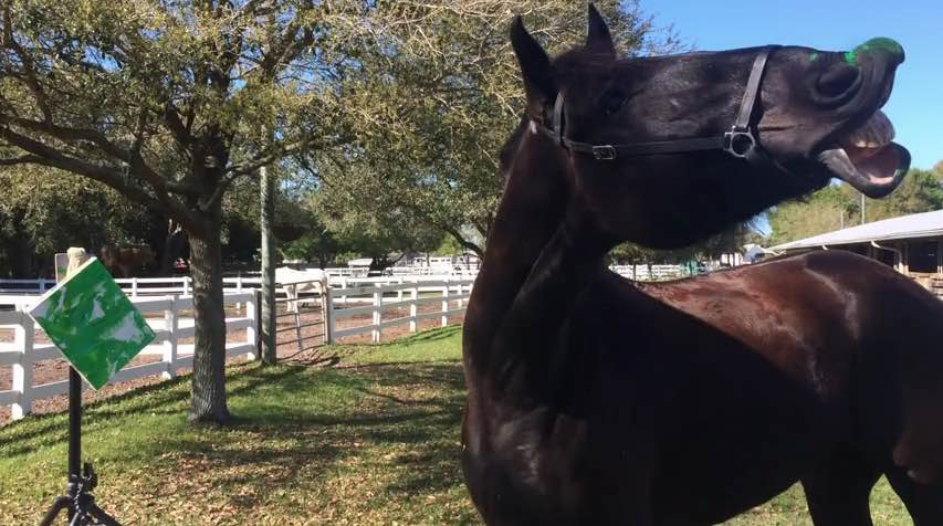 picasso-horse-whinnying-stpetepd-youtube
