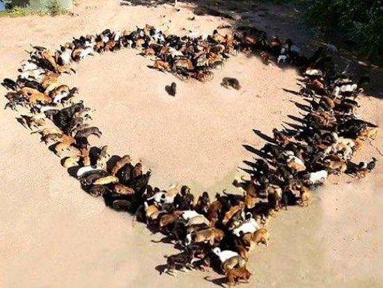 save-sashas-dogs-serbia