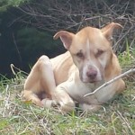starving dog rescued in WA-AmandaGuarascio-FB