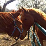 vegas horse-in-love-submitted