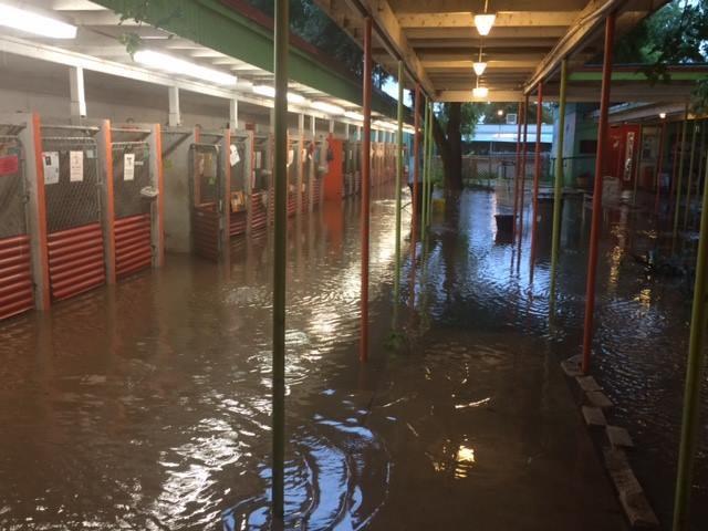 Austin Pets Alive flooding FB