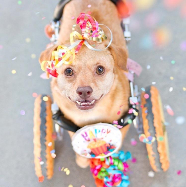 Daisy the Dog Photo Instagram