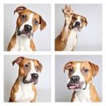 Dog-photo-booth-Humane-Society-Utah-Photo-Credit-Guinnevere-Shuster