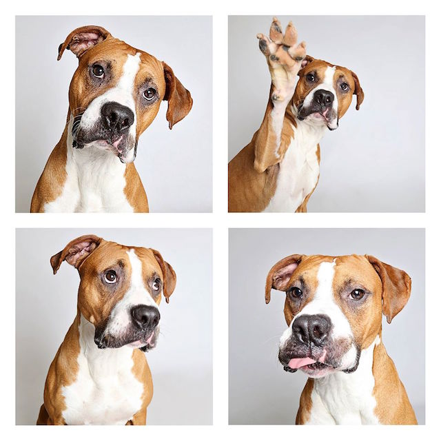 Dog-photo-booth-Humane-Society-Utah-Photo-Credit-Guinnevere-Shuster