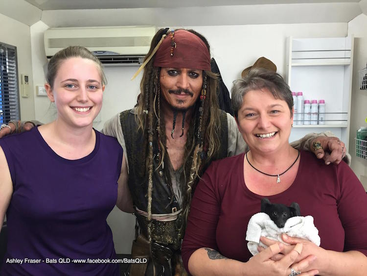 Johnny Depp Bat QLD Facebook Photo