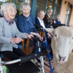 Nursing Home Farm Visit Edgars Mission Permission Granted