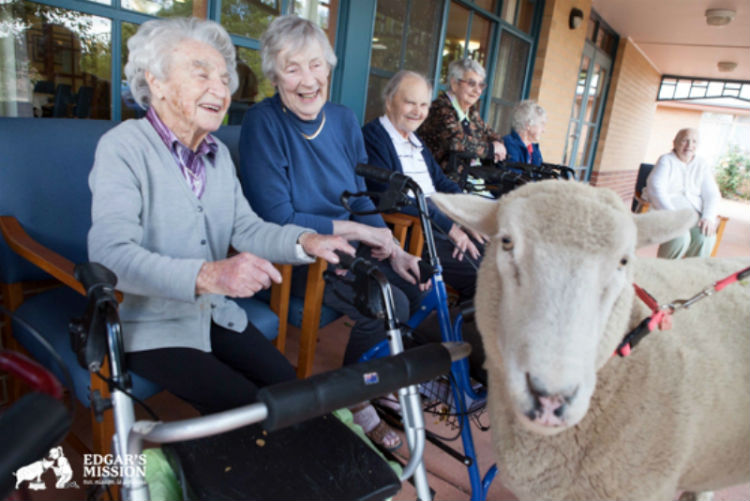 Nursing Home Farm Visit Edgars Mission Permission Granted