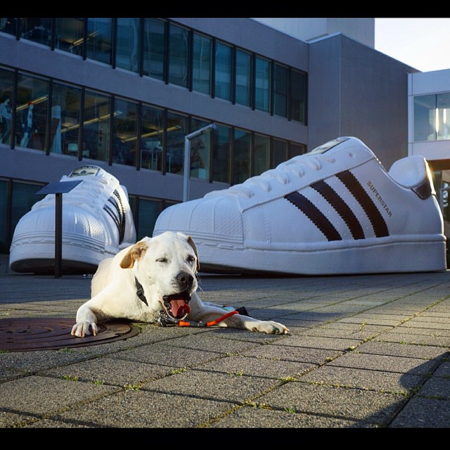 Poh checks out Adidas headquarters in Portland, Oregon.