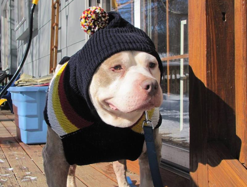 Second-Chance-Animal-Rescue-submitted-dog-in-hat