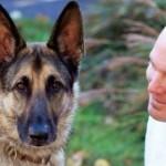 dog-shepherd-with-veteran-AmHumaneAssoc