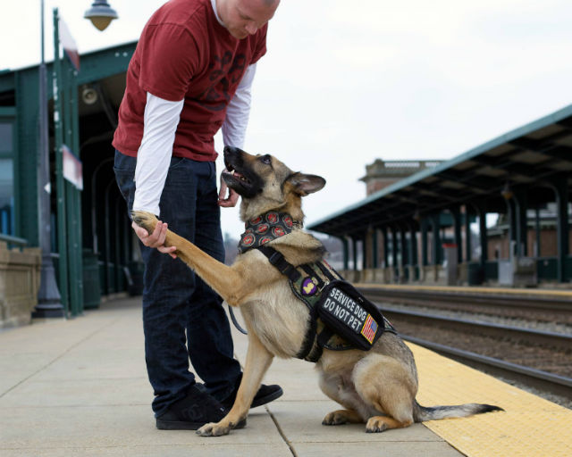 haag and axel dog of the year submitted american humane association