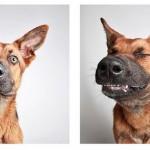 photobooth-dogs-UtahHumaneSociety