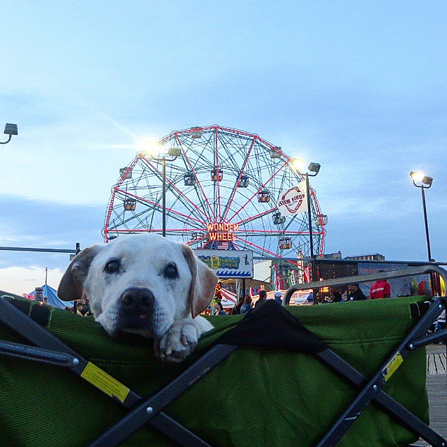 poh big adventure coney island instagram
