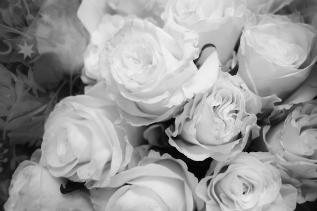 Bygone-roses-b+w-submitted-TammyRuggles