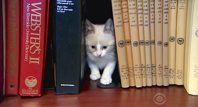 Cat-Library-screenshot-CBS-News-video