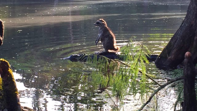 Gator-Raccoon-Richard Jones Family photo