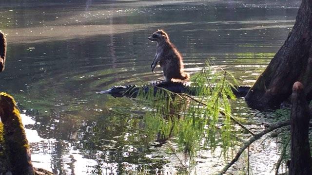 Gator-Raccoon-Richard Jones Family photo