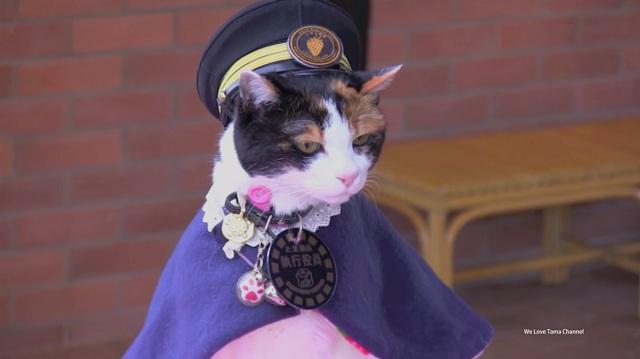 Tama the cat-YouTube